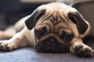 狗子老挑食,多半是惯的,自己身上找原因?